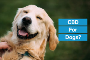 CBD for Happy Dogs